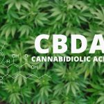 Why Use CBDA Instead of CBD For Therapeutic Needs?