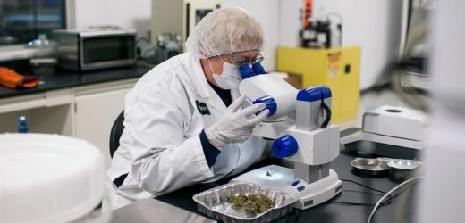 Five Factors to Consider when Choosing a Cannabis Testing Lab