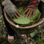 Important Reasons One Should Know Why Kratom Is Big Name in Indonesia